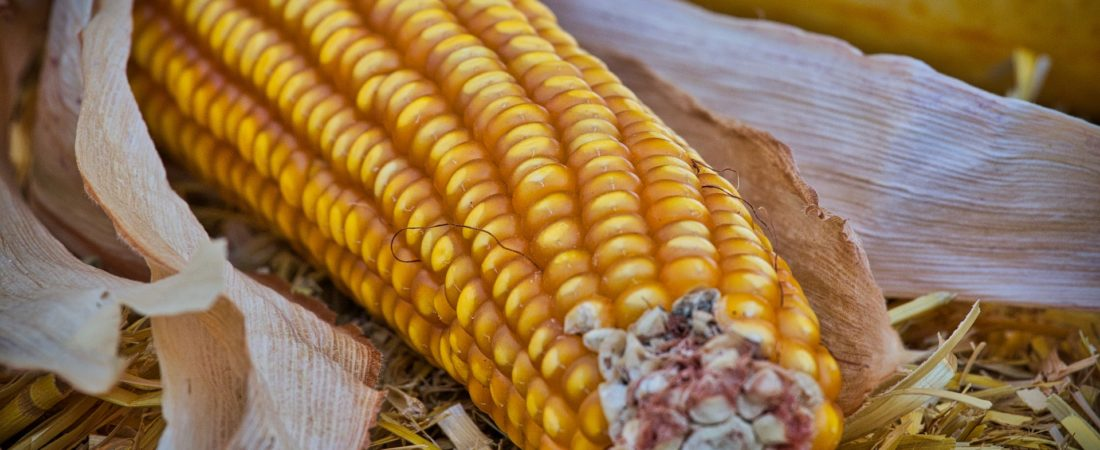 wo-maissirup-kaufen